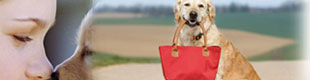 pet friendly hotels hamptons